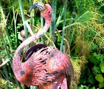 Alert Flamingo at County Charm