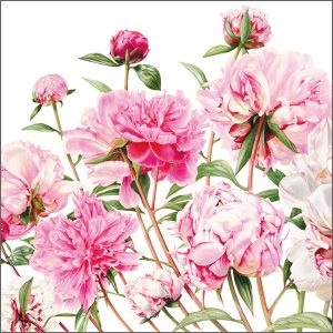 Floral Greeting Cards - Fresh and Joyous Peonies Print by Billy Showell